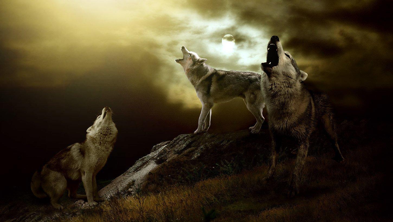 Was tun, wenn die Stunde des Wolfes einem den Schlaf raubt?