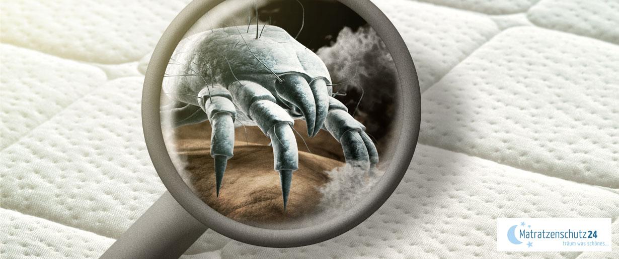 Wie Sie Milben im Bett und in der Matratze erkennen und bekämpfen