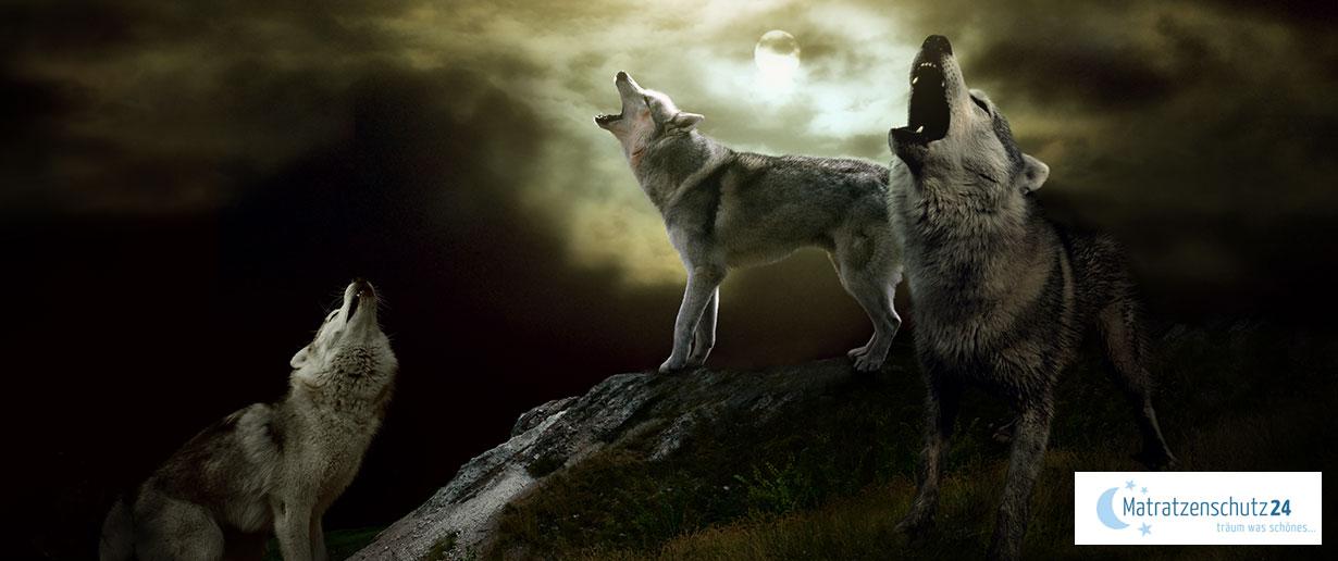 Wölfe jaulen bei Vollmond