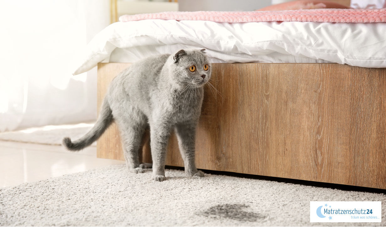 Problem: Hund oder Katze macht ins Bett