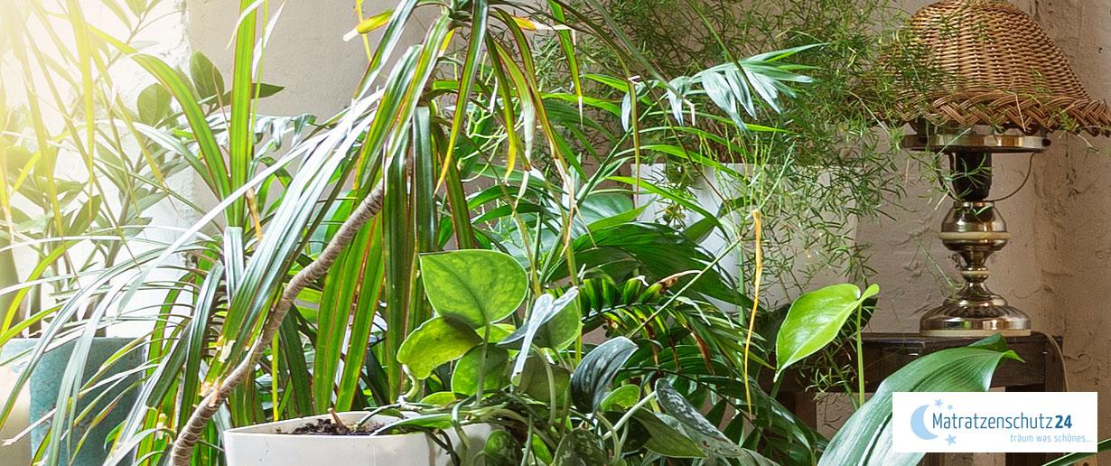 Viele grüne Zimmerpflanzen