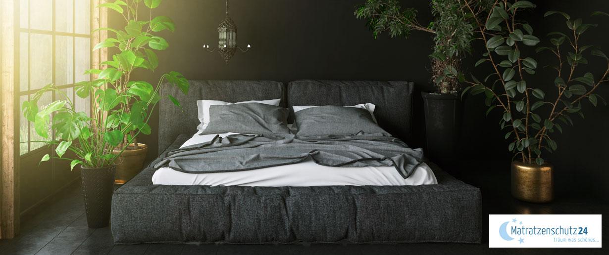 edles Schlafzimmer in dunklen Farben mit grüner Pflanze